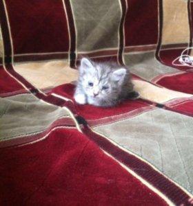 Кошка 🐱