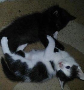 Котята от домашней кошки