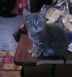 Продам не дорого котенка