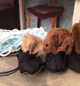 Одежда для маленькой породы собак