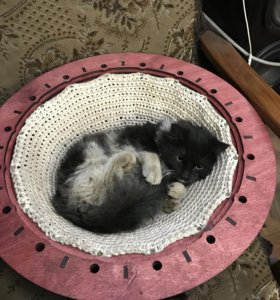 Лежак для кота. Лежак для кошки