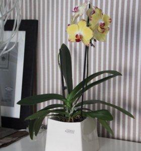 Кашпо/ваза под орхидеи и цветы