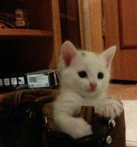 Милые котятки!