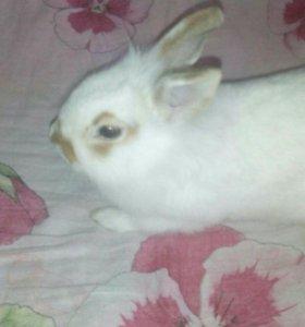 Отдадим кролика