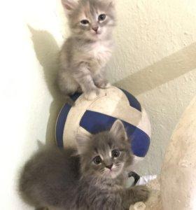 Потрясающие котятки