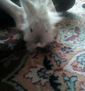 Вязка декаротивного кролика