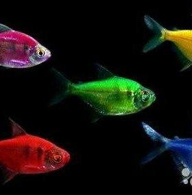 Новый ассортимент аквариумных рыбок!