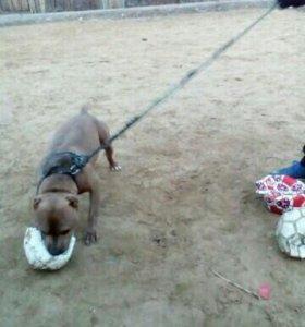 Найдена собака в районе второй площадки