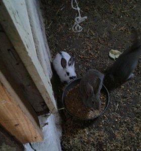 кролики,