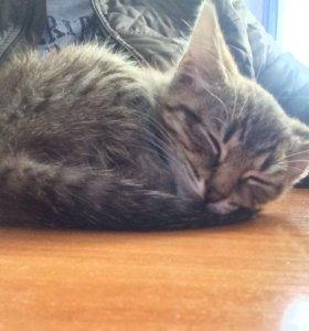 Котёнок девочка приучена к лотку