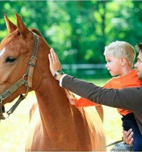 """Экскурсия """"путешествие в мир лошади """""""