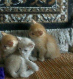 Милые котята ждут своего хозяина