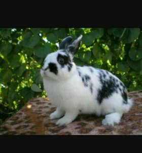 Кролики и козлята
