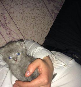 Продаю котят !!!