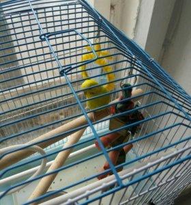 попугай с клеткой