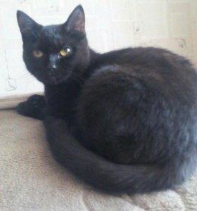 Молоденькая кошка мышеловка