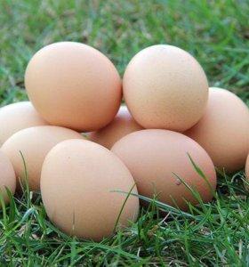 Домашние куриные яйца от деревенских курочек.