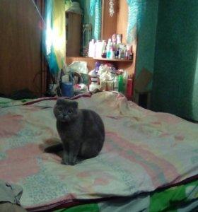 Кошечка Фиона