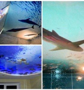 Дельфины 🐬 натяжные потолки