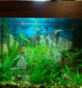 Готовый аквариум