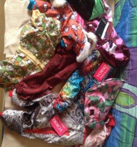Много одежды для собачек