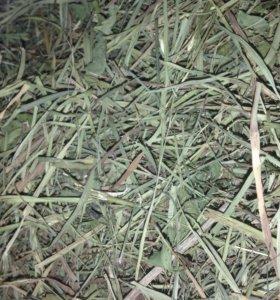 Продам сено для кроликов, шиншилл и др. грызунов