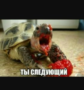 Куплю/приму в дар сухопутную черепаху
