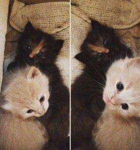Котята 🐱 ищут дом 🏡