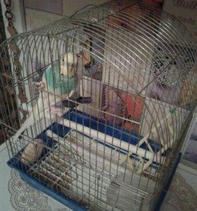 Папугай мальчик с клеткой