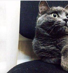Вязка кошки