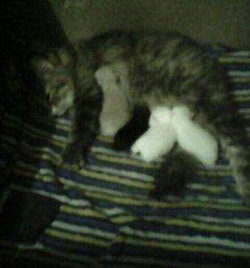 А у нас сегодня кошка родила ачера котят!....