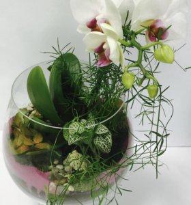 """Флорариум """"Орхидея в бокале Сноу"""""""