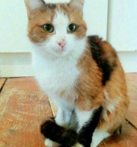 Четырехцветная кошка в добрые руки
