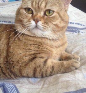 Вязка с очаровательным котиком