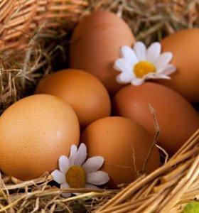 Домашеее куриное яйцо
