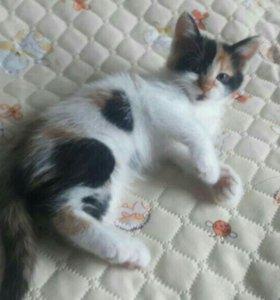 Котенок 2-х месяцев