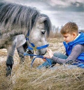 Фотосессия с пони