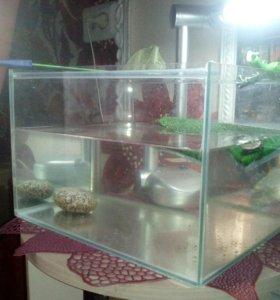 Черепеха красноухая+ аквариум