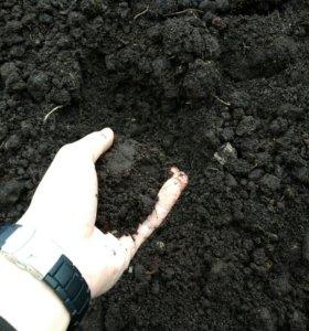 Плодородный грунт (чернозём)