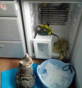 Ремонт холодильников в Северодвинске