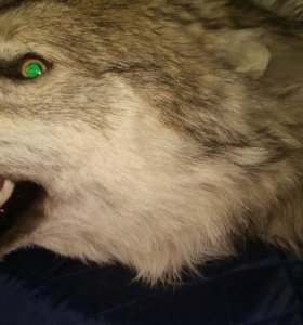 Изготовлю ковёр из шкуры диких животных