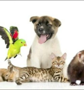 Уход и передержка животных