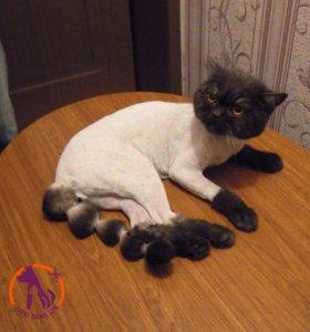 Стрижка кошек без наркоза на дому