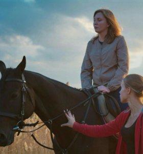 Занятия по верховой езде, фотосессии с лошадьми