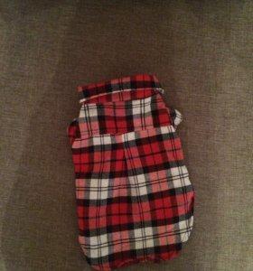 Рубашка для собачки мелкой породы