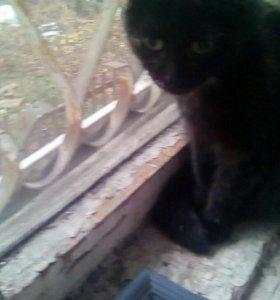 Кошка нашли сегодня в районе Воскресенской!