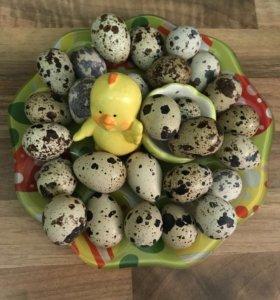 Яйца перепелиные с бесплатной доставкой.