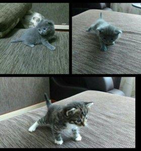 Котята. Бесплатно