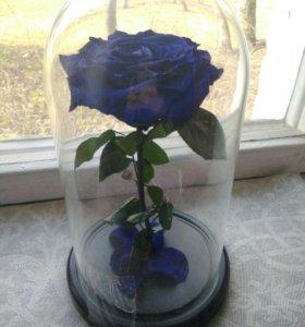 Роза в куполе из сказки