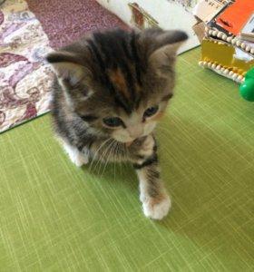 Котёнок милашка